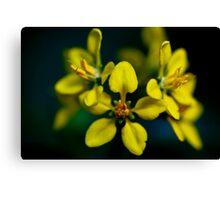 Beautiful Yellow Blur Canvas Print
