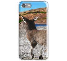 kangaroo at lucky bay iPhone Case/Skin