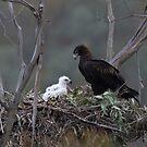 Eagle Nest. by Donovan wilson
