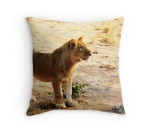 Zimbabwe Young Lion... Throw Pillow