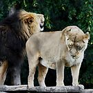 The King Showing Who is KING !!! by AnnDixon