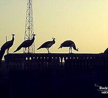 Untitled by Rahul Singh