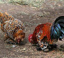 Free Range Chickens by AnnDixon