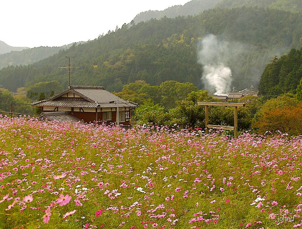 Wildflowers, Ohara, Kyoto, Japan by johnrf