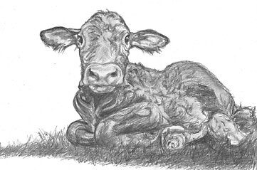 calf by dirtthirsty
