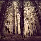 Eerie forest by kumari
