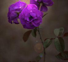 Purple Delight by sharon2121