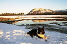 Christmas Day Walk with Indy by Michael Haslam