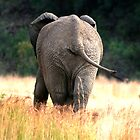 back of an elephant walking in the bush  by JadePhoto
