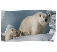 Polar Bear Mom With Cubs Poster