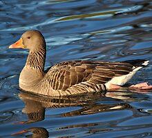 Greylag Goose by Dorothy Thomson