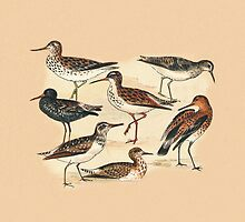 Waders Three by Eric Kempson