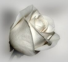 Simply White by Sandy Keeton
