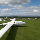 Line up of gliders. by sandyprints