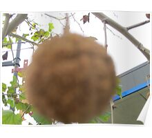 hanging ball on a treebranch  Poster