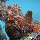 Giant Frogfish by James Hall