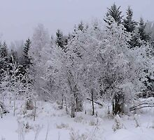The Beauty of Winter and Frost by MaeBelle