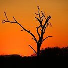 Londolozi sunset! by jozi1