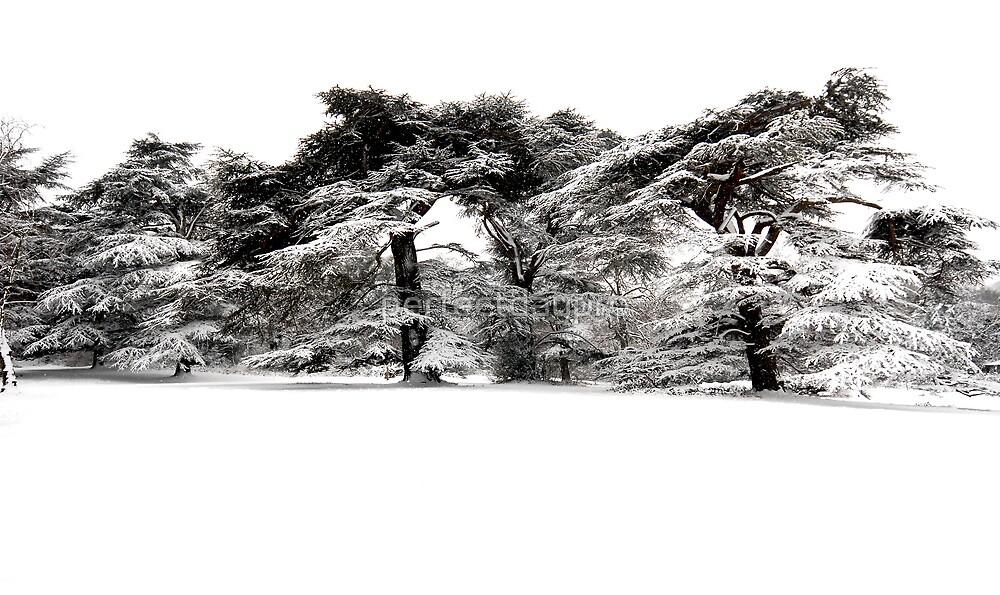 white park by perfectdaypro
