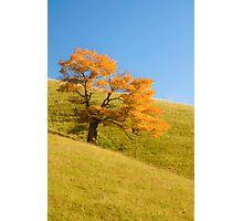 Appalachian Oak Photographic Print