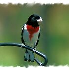 Red-Breasted Grossbeak by teresa731