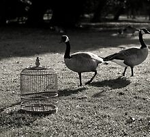 Inadequate Tools: The Bird Cage by Maria del Rio