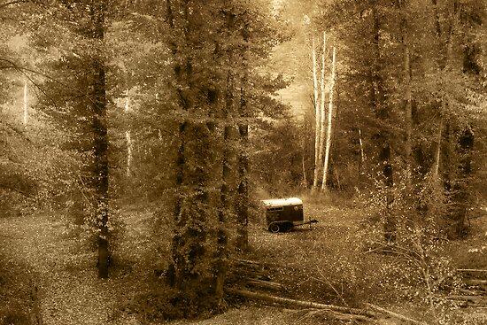 Memories of seasons past (bw) by John Poon