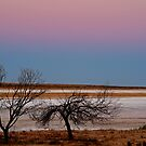 Salt Pan at Dusk, Simpson Desert by Joe Mortelliti