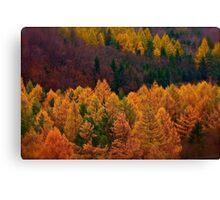 Wonder's of autumn colors  - Poloniae Alpe Besczade . by Brown Sugar - Mr.Medicine . F** Favs  (8) . Views (460) ). Thank you a bunch friends !    Canvas Print
