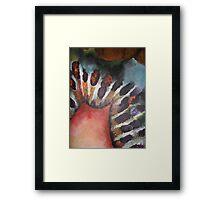Kiwi 1 Framed Print