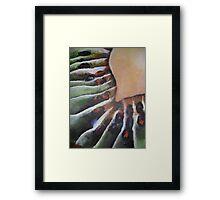 Kiwi 2 Framed Print