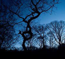 Woods at Dusk II by RockingMagpie