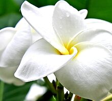 Beautiful Flower by Denise N Young