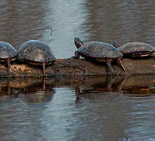 Topsy Turvy Turtles by Bill Maynard