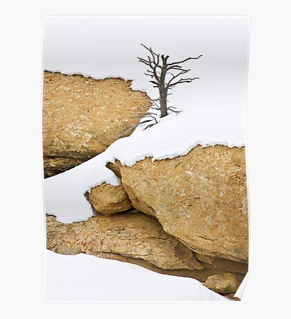 Winter Tree on Sandstone Poster