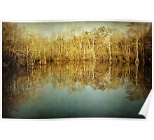River Cypress Poster