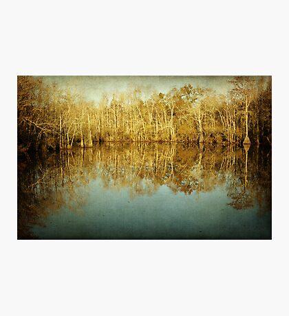 River Cypress Photographic Print