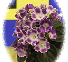 African Violets by Kenneth Hoffman