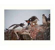 Gentoo penguin disagreement - Antarctica Art Print