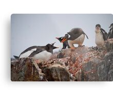 Gentoo penguin disagreement - Antarctica Metal Print