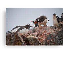 Gentoo penguin disagreement - Antarctica Canvas Print