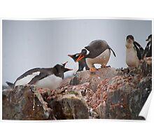 Gentoo penguin disagreement - Antarctica Poster