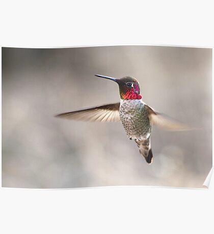 Flutter Poster