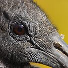A Face Only a Vulture Could Love by naturalnomad