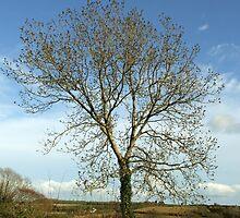 Irish Countryside by CFoley