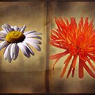 My Favorite Flowers Book  by David Dehner