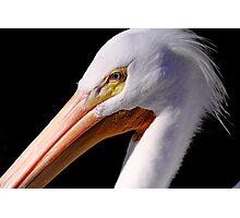 White Pelican Portrait Photographic Print