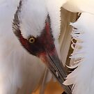 Whooping Crane Preening by naturalnomad