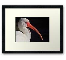 White Ibis Portrait Framed Print
