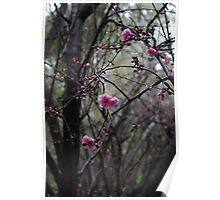 Blossoms bloom in spring Poster